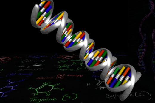 3d Model of Dna Labeled Dna Make a Dna Model 3d